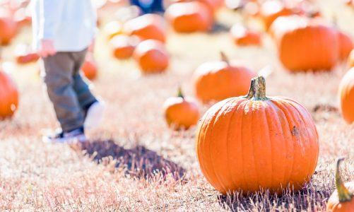 Pumpkin patch and farm visit: animals in French