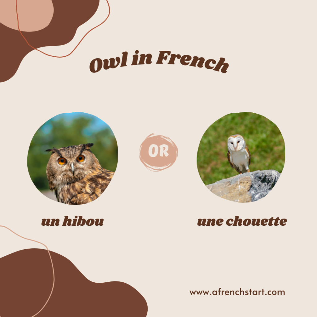 owl in french