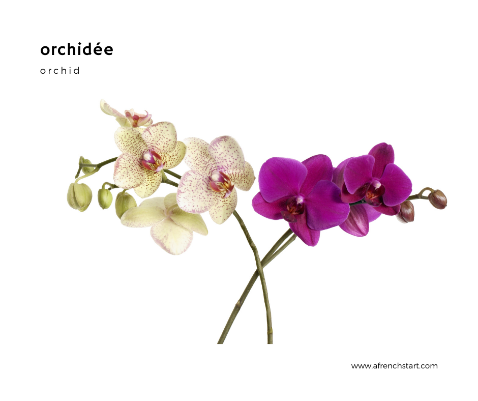 flowers in french orchidée
