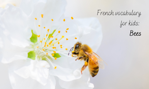 Learning about bees in French: vocabulary for kids