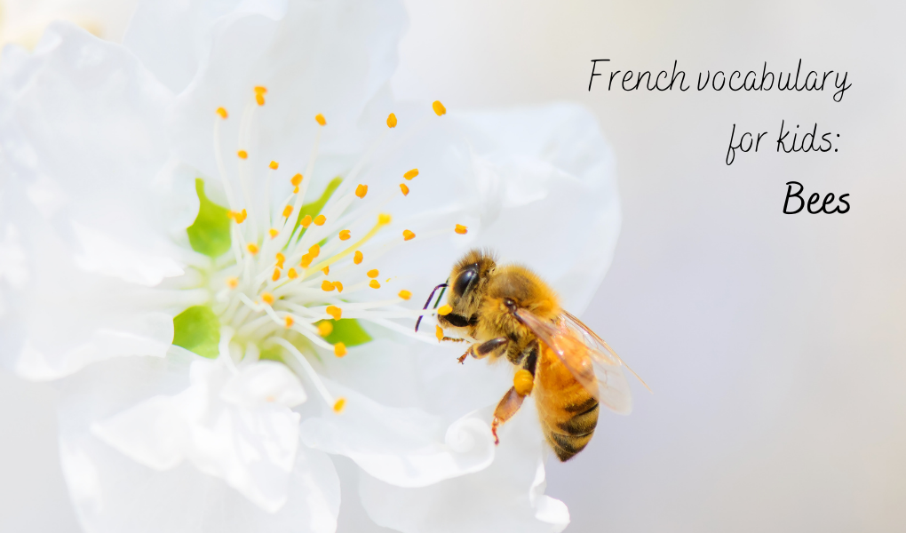 Learning about bees in French
