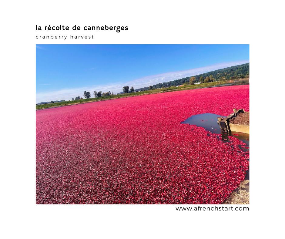 learning french - cranberry harvest
