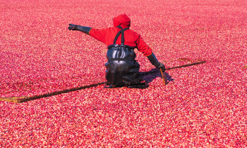 learning french at the cranberry farm